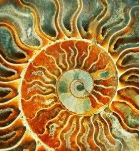 Energized Wormhole